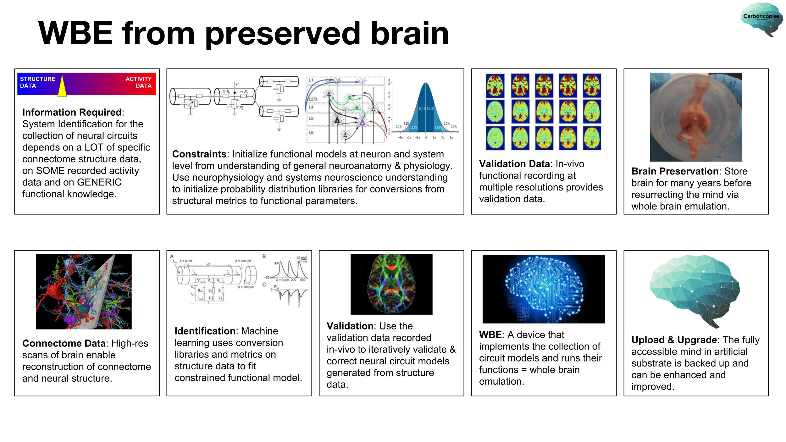 WBE-via-preserved-brain-20180407-2500x1406